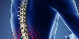 ngải cứu chữa đau lưng hiệu quả