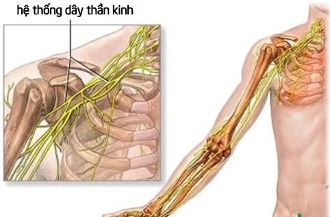 dây thần kinh bả vai và cách massage giảm đau