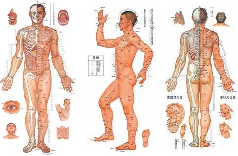 Có bao nhiêu huyệt đạo trên cơ thể người