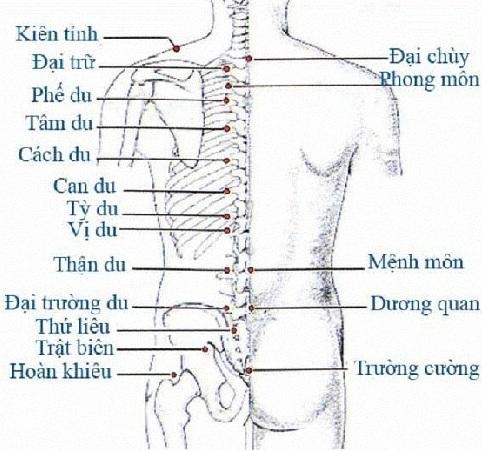 Huyệt đạo ở vùng lưng, eo và mông