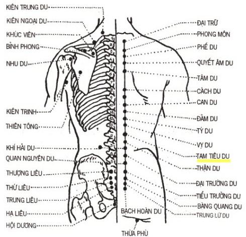 Sơ đồ huyệt đạo vùng lưng bấm huyệt chữa đau lưng